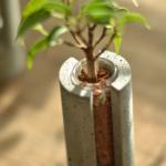 PLUGは植え込み材の乾き具合がわかりやすく、水やりのタイミングに悩みません。